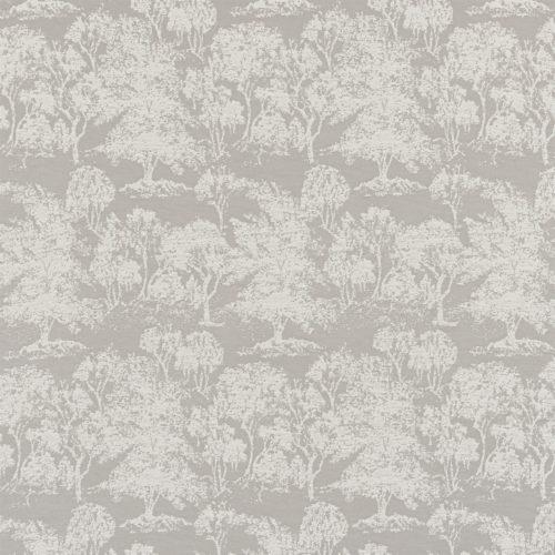 Acacia Dove